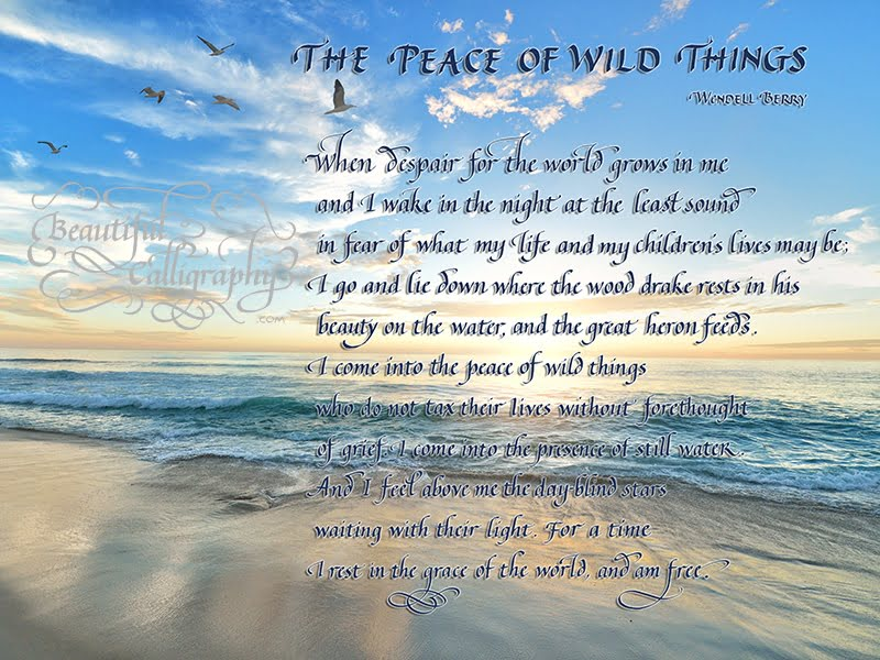 "Calligraphy quote of the poem ""The Peace of Wild Things"" by Wendell Berry superimposed on a beach scene"