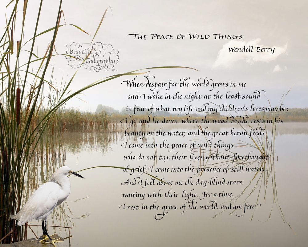 Famous poem, most requested popular poem, The Peace of Wild Things by Wendell Berry written in calligraphy on scene of birds in the wild