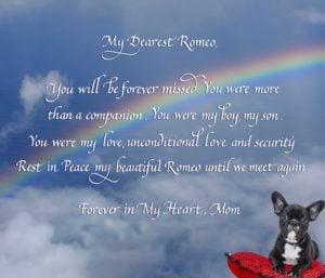 Pet memorial in calligraphy with dog's photo superimposed under the rainbow bridge